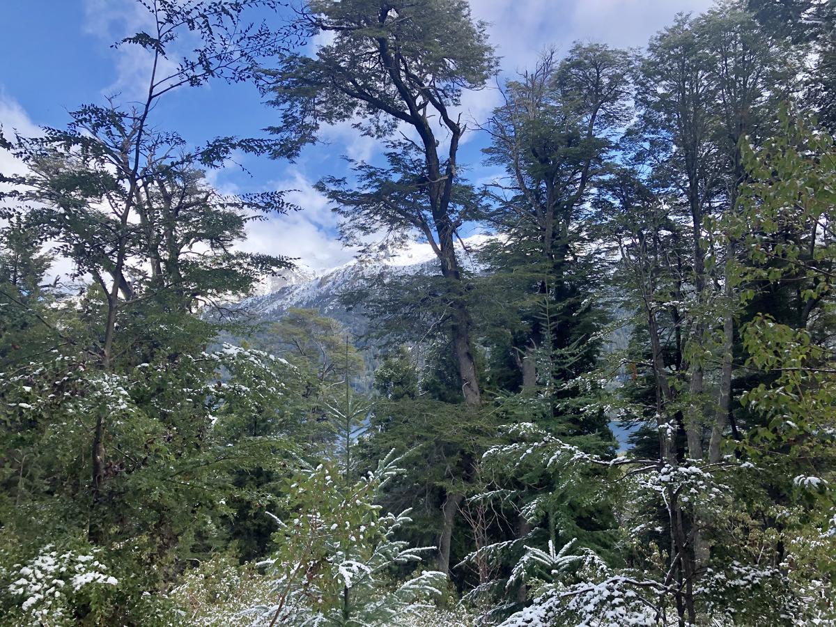Foto Terreno en Venta |  en  Arelauquen,  Bariloche  Arelauquen - Balcón del Lago
