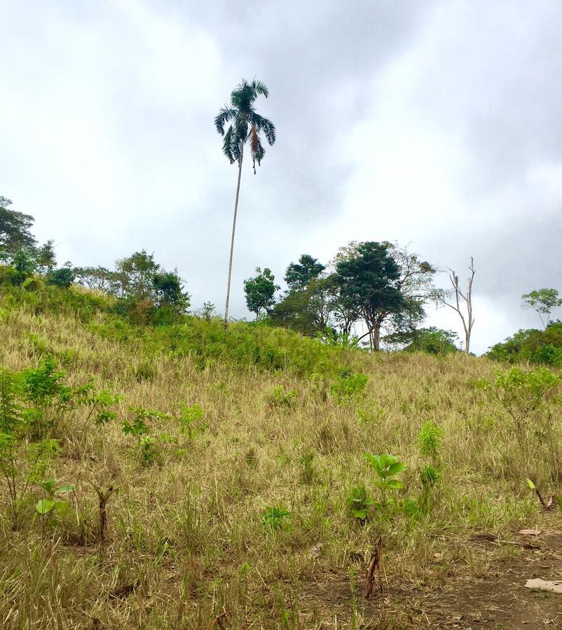 Foto Quinta en Venta en  Pedernales ,  Manabí  25 minutos de Pedernales