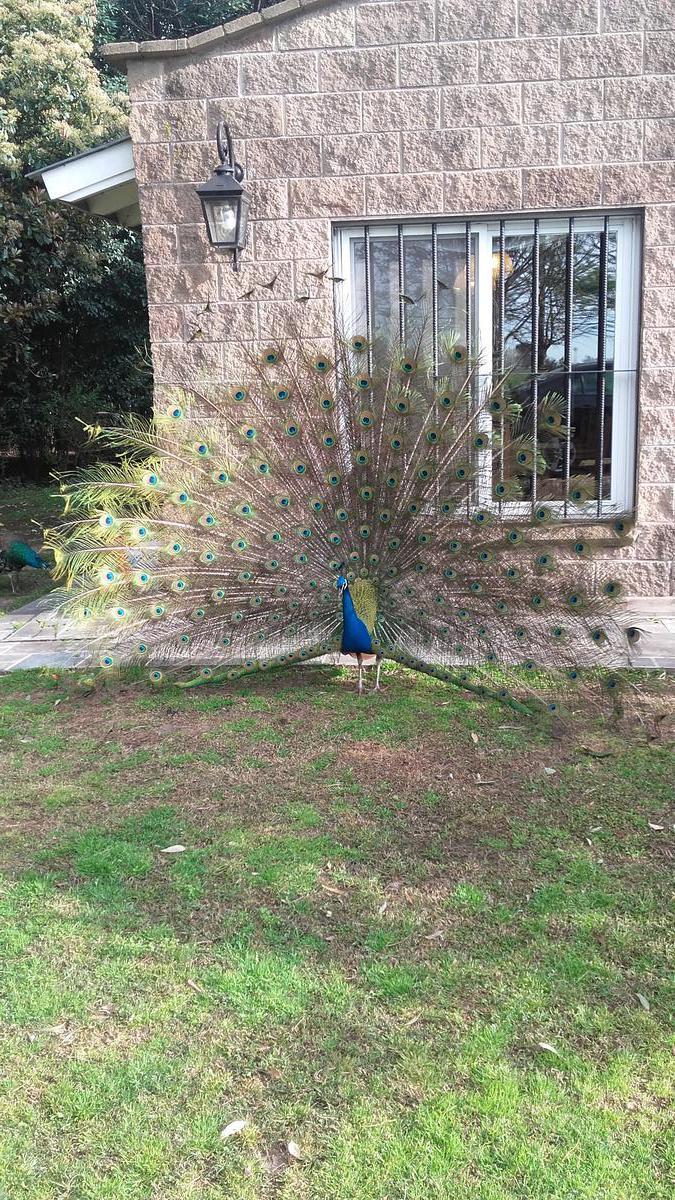 Foto Casa en Alquiler temporario en  Torres,  Lujan  Increible Haras de polo de 50ha en Open Door