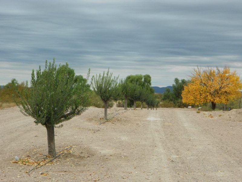 Foto Terreno en Venta en  Cuadro Benegas,  San Rafael  ruta nac.144 600