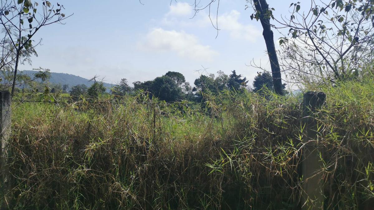 Foto Terreno en Venta en  Coatepec ,  Veracruz  Terreno en Venta en el Libramiento de Coatepec, Congregación plan de la Cruz.