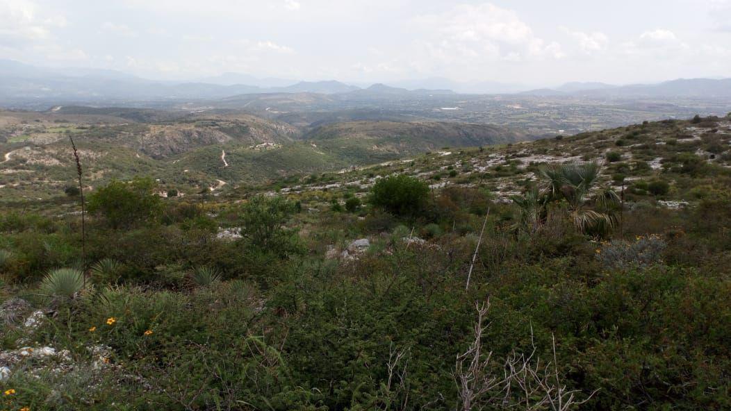 Foto Terreno en Renta en  Alfajayucan ,  Hidalgo  TERRENO EN RENTA EN HIDALGO