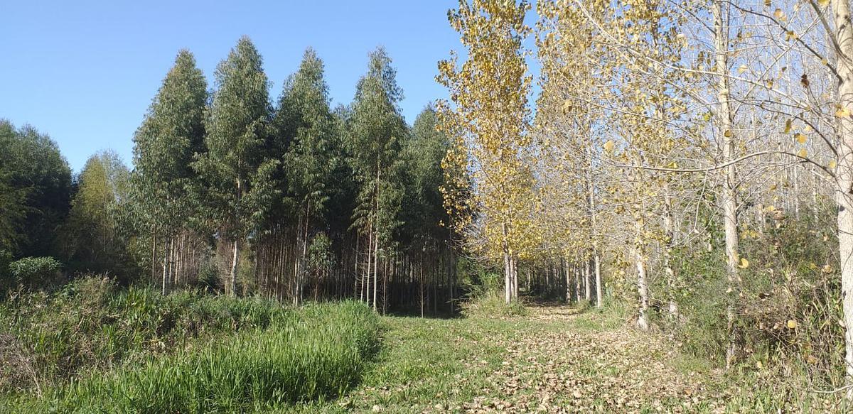 Foto Terreno en Venta en  Canal La Serna,  Zona Delta San Fernando  Canal La Serna Quinta 6 ha