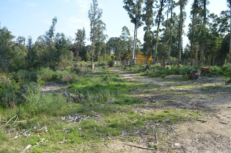 Foto Terreno en Venta en  Punta Ballena ,  Maldonado  Las Cumbres, Solanas