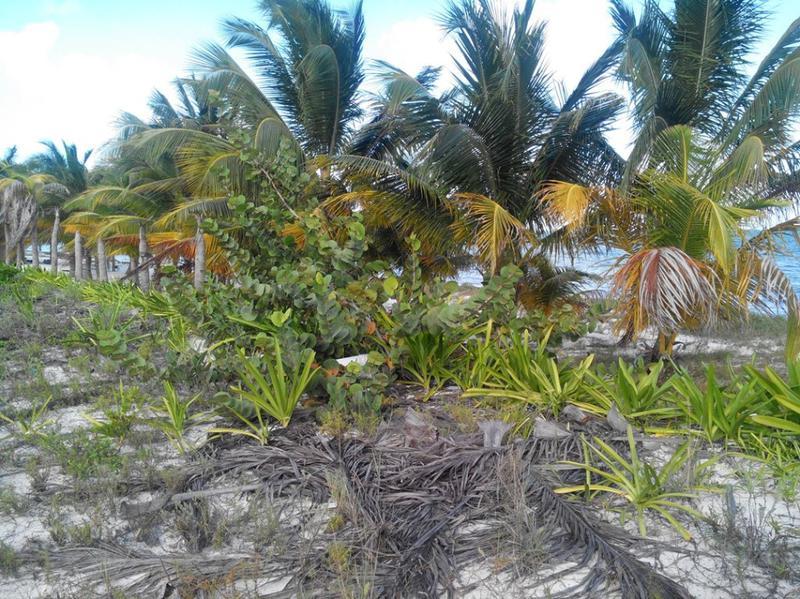 Foto Terreno en Venta en  Puerto Juárez,  Cancún  Terreno venta frente al mar en Playa Mujeres oportunidad