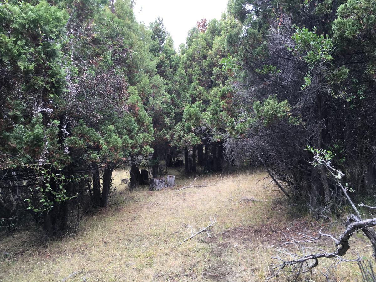 Foto Campo en Venta en  Trevelin,  Futaleufu  Ruta 71 Trevelin