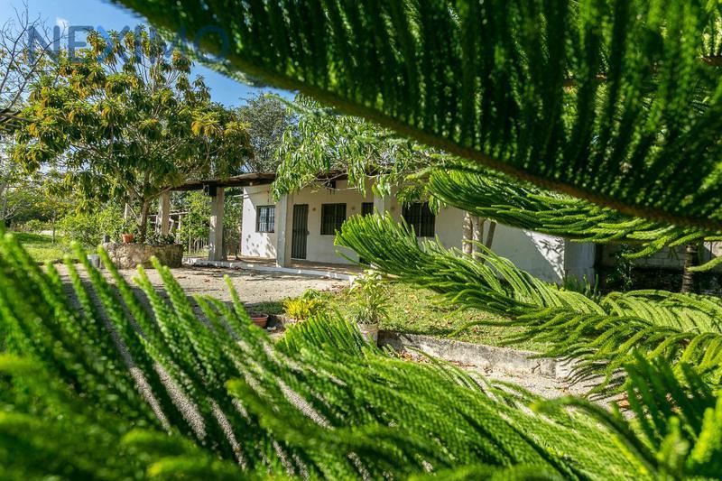 Foto Quinta en Venta en  Puerto Morelos,  Puerto Morelos  Venta Terreno o Rancho Finca Leona Vicario a minutos Cancun y Puerto M
