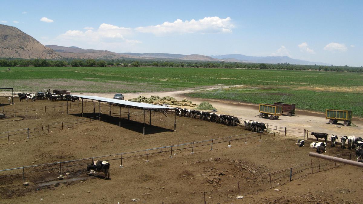Foto Terreno en Venta en  Rancho o rancheria Guadalupe,  San Felipe  Rancho Granja de Guadalupe, San Felipe, Guanajuato