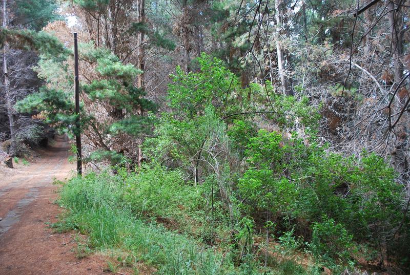 Foto Terreno en Venta en  Península de San Pedro,  San Carlos De Bariloche  Peninsula San Pedro
