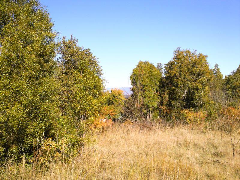 Foto Chacra en Venta en  Cerro Amigo,  El Bolson  RR615