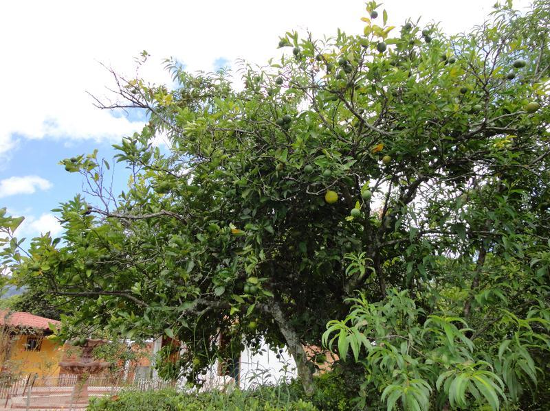 Foto Casa en Venta en  La Cimbra,  Valle de Angeles  Casa en Venta en La Cimbra, Valle de Angeles