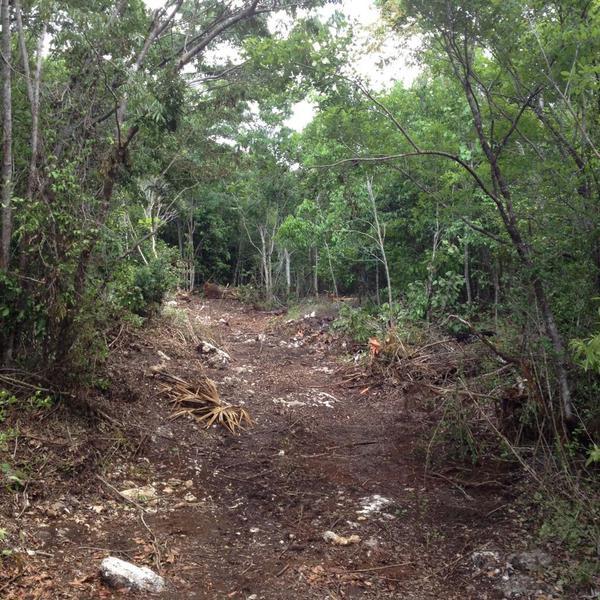 Foto Terreno en Venta en  Puerto Morelos,  Puerto Morelos  Terreno ruta de los cenotes 19 ha