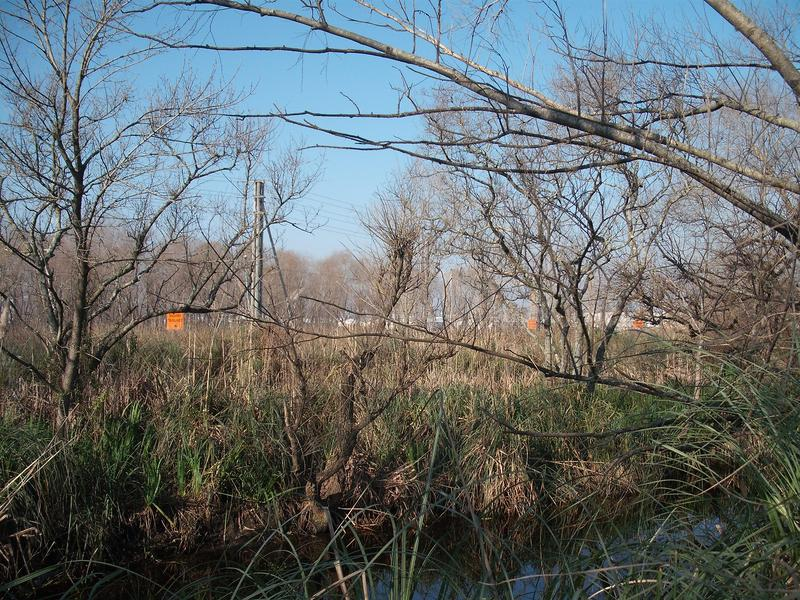 Foto Campo en Venta en  San Miguel (Maschwitz),  Ingeniero Maschwitz  RUTA 26 Y BRASIL
