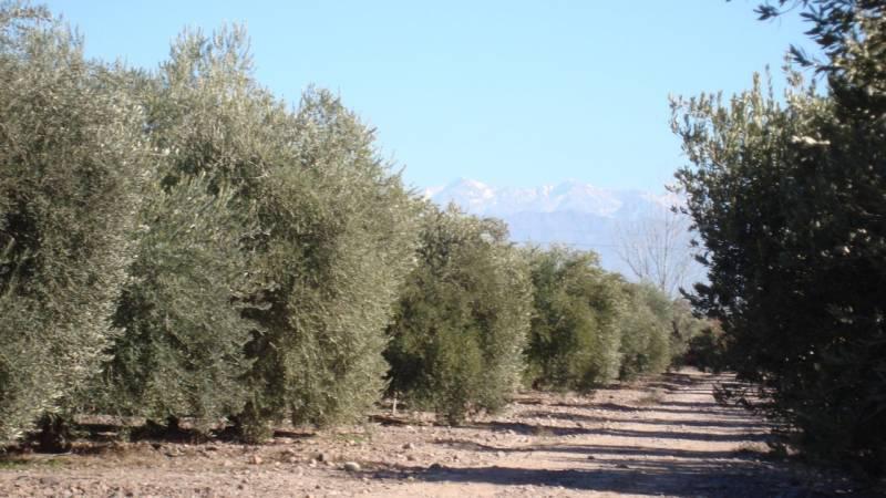 Foto Campo en Venta en  Maipu ,  Mendoza  Ruta 60
