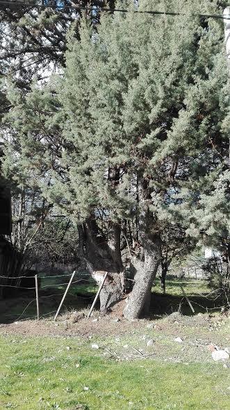 Foto Local en Venta en  Villa Turismo,  El Bolson  RR3616