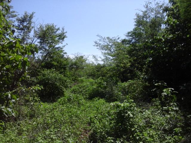 Foto Terreno en Venta en  Amapala ,  Valle  Terreno Residencial en Venta  en Amapala, Honduras