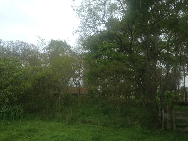 Foto Campo en Venta en  Las Flores ,  Interior Buenos Aires  Las Flores, a 7km del pav. y ciudad
