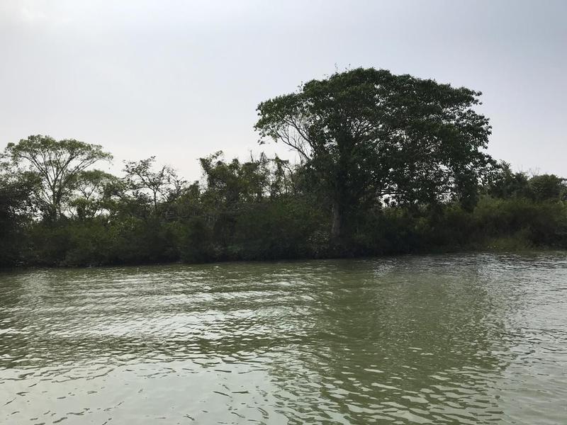 Foto Terreno en Venta en  Sauce,  Tampico  Venta de Terreno sobre el Río Tamesí