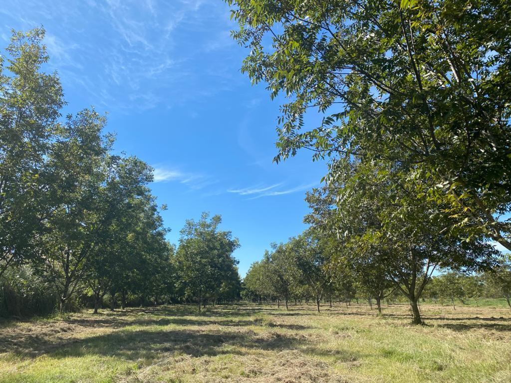 Foto Quinta en Venta en  Felicaria,  Zona Delta San Fernando  Ar. Felicaria