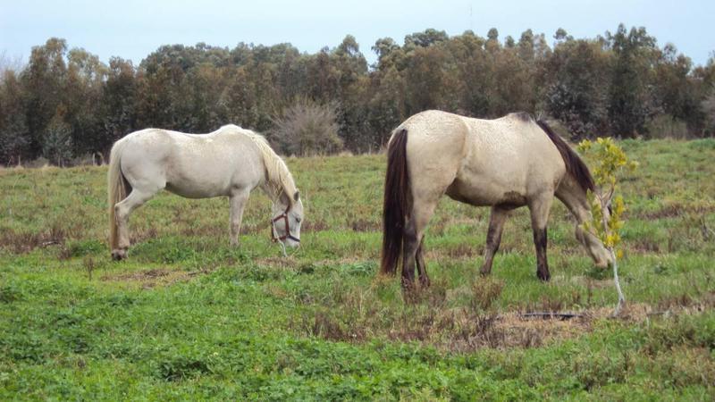 Foto Chacra en Venta en  Colonia del Sacramento ,  Colonia  Fraccion de 1 hectarea en zona de San Pedro