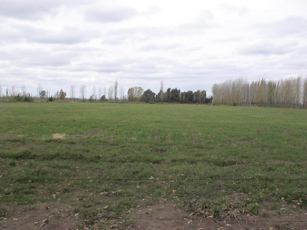 Foto Campo en Venta en  San Rafael ,  Mendoza  Corredor Bioceánico Pehuenche