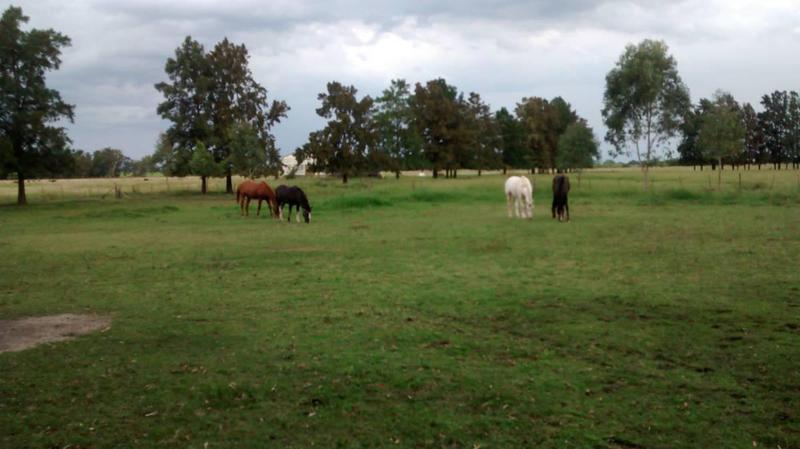 Foto Campo en Venta en  Coronel Brandsen ,  Interior Buenos Aires  Ruta 29 - Km. 17 (Brandsen)