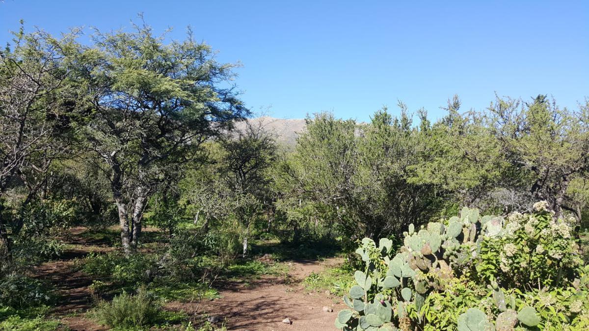 Foto Terreno en Venta en  Cerro de Oro,  Merlo  VENDO INCREIBLE LOTE DE 3500 M2 EN CERRO DE ORO SAN LUIS TERCER MICROCLIMA DEL MUNDO