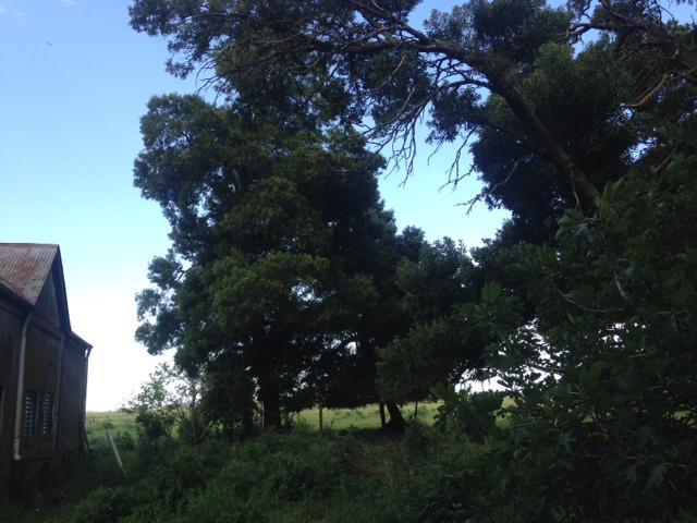 Foto Campo en Venta en  Pardo,  Las Flores  Las Flores, a 6 km de R N°3 y 230 km de CABA
