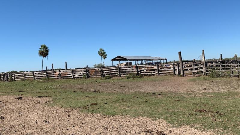 Foto Campo en Venta en  Benjamín Aceval ,  Presidente Hayes  Km al 100