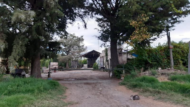 Foto Chacra en Venta en  Villa Regina,  General Roca  CHACRA 9 HECTAREAS V. REGINA