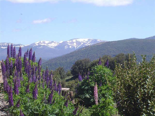Foto Campo en Venta en  San Martin De Los Andes,  Lacar   entre  y