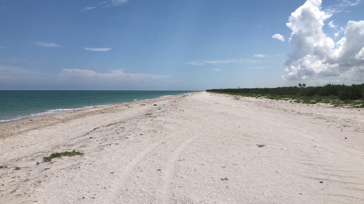 Foto Terreno en Venta en  Celestún ,  Yucatán  Terreno frente al mar, Celestun Yucatan Mexico.