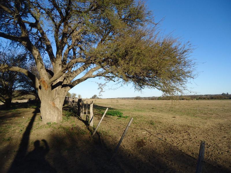 Foto Terreno en Venta en  Toay ,  La Pampa  Pecho Colorado (Chacras)