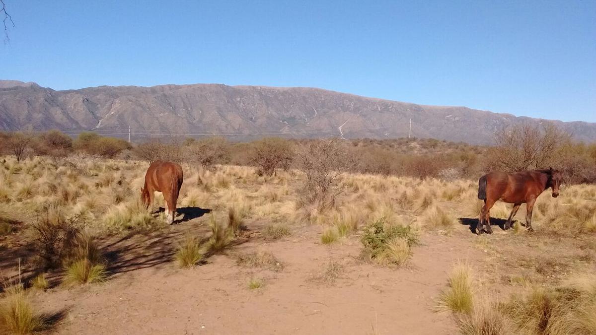 Foto Campo en Venta en  San Fco Del Monte De Oro,  Ayacucho  Chacra de 22 hectareas. Microclima.