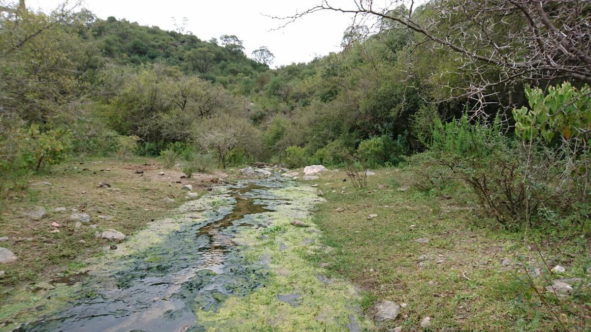 Foto Campo en Venta en  Cruz Del Eje ,  Cordoba  CAMPO - CRUZ DEL EJE