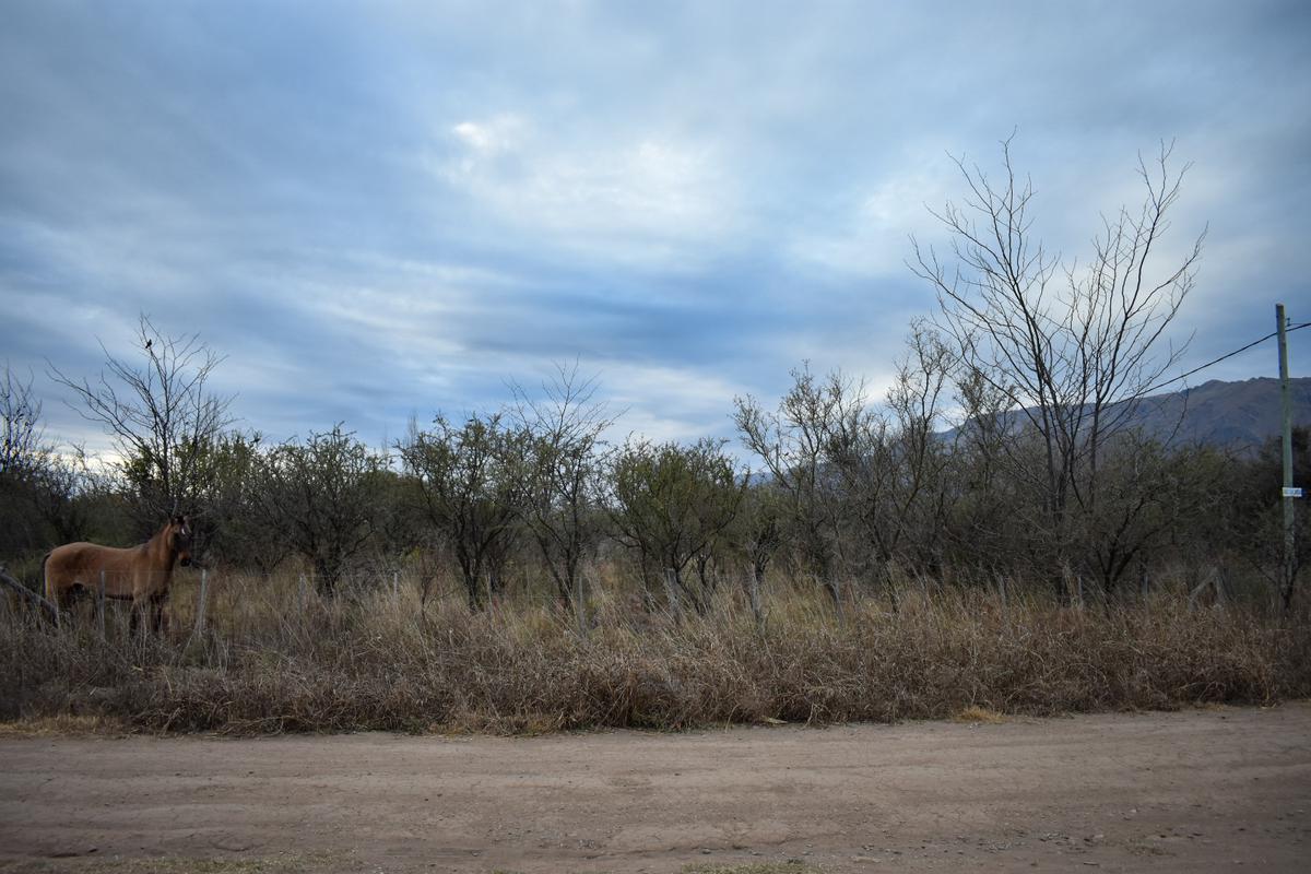Foto Terreno en Venta en  Merlo,  Junin  VENDO 2 INCREIBLES LOTES  DE 800 M2 EN MERLO SAN LUIS