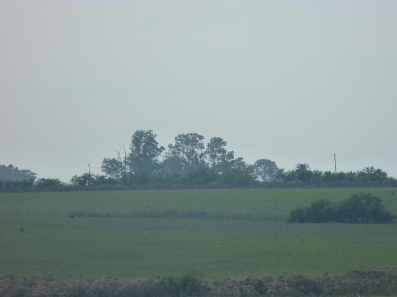 Foto Campo en Venta en  General Campos,  Concordia  Zona Rural General Campos