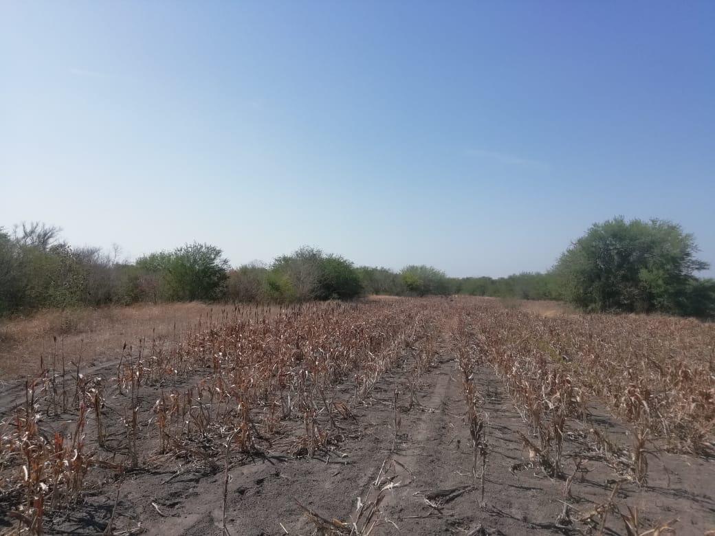 Foto Terreno en Venta en  González ,  Tamaulipas  Carretera Villa Blanca, Gonzalez