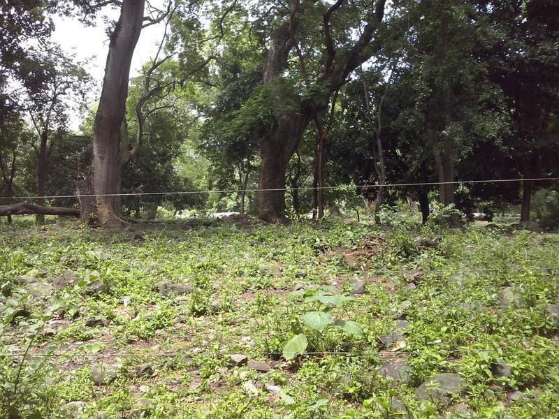 Foto Terreno en Venta en  Pueblo Tepetzintla,  Tepetzintla  Rancho ganadero en venta en Tepetzintla, Veracruz