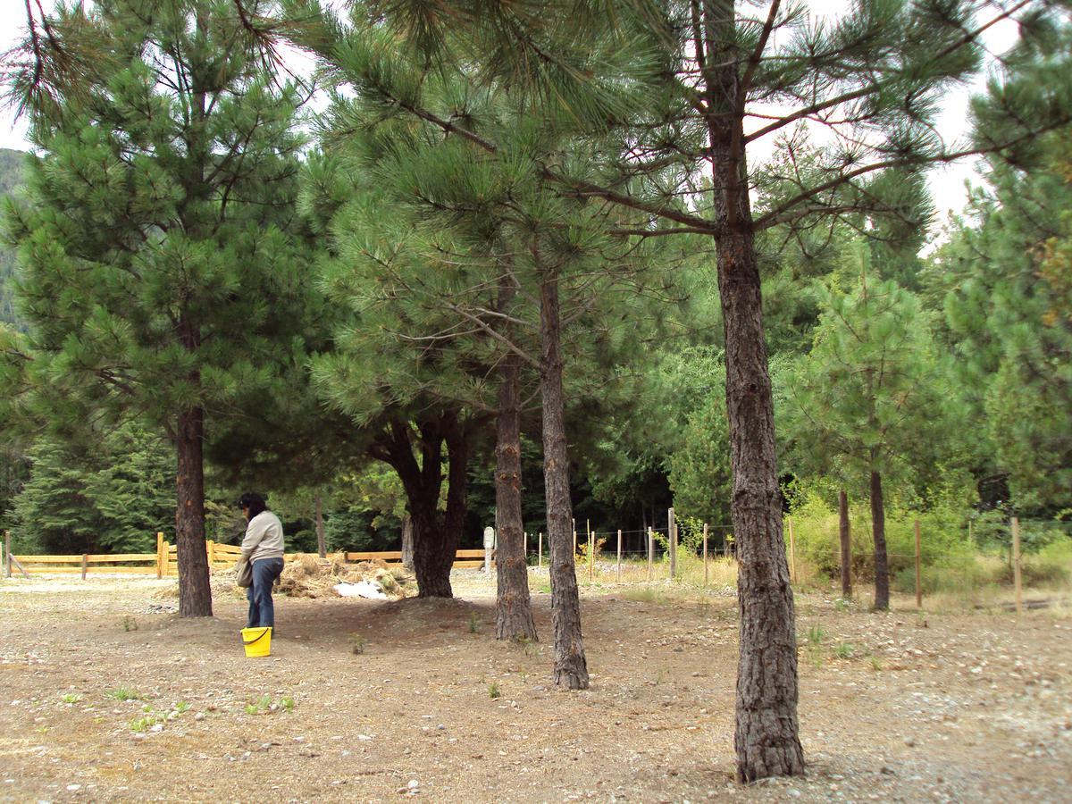 Foto Terreno en Venta en  Centro,  Lago Puelo  RR3849
