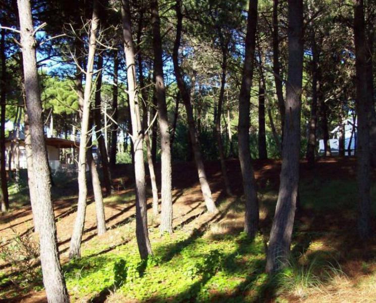 Foto Terreno en Venta en  Pinamar Norte,  Pinamar  Lote Cul de Sac Eteoneo esq.Poseidon, Pinamar