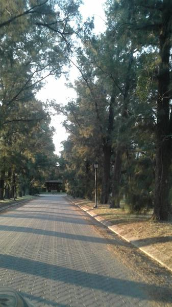 Azahares del Paraná