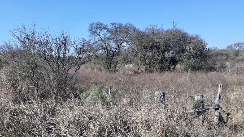 Foto Campo en Venta en  Vera Y Pintado,  San Justo  Vera y Pintado