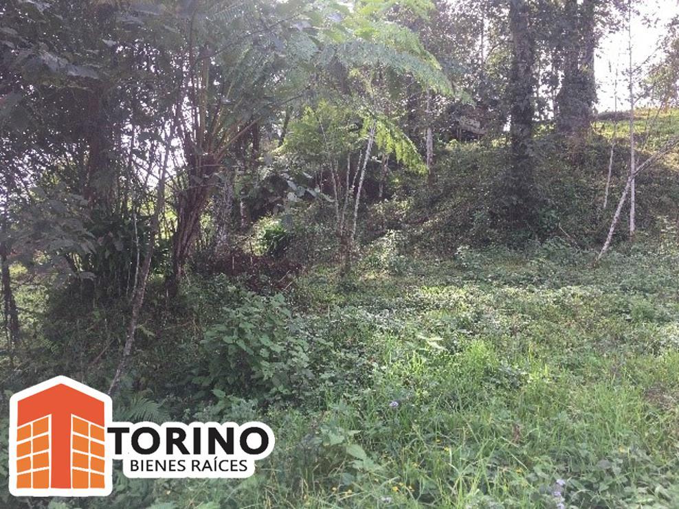 Foto Terreno en Venta en  Ocotepec ,  Puebla  TERRENO RUSTICO EN FINCA CAMINO A LA BARRANCA EN JALANCINGO, VERACRUZ