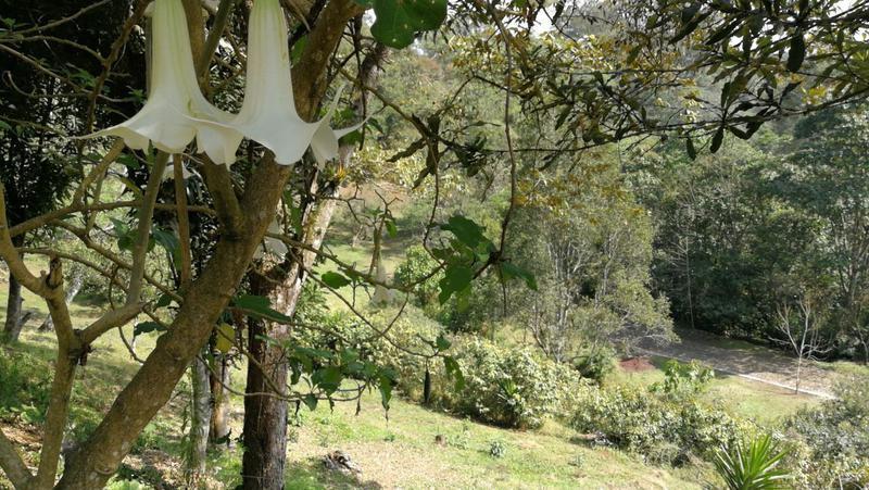 Foto Terreno en Venta en  Los Carriles,  Coatepec  ASRAM POR LOS  CARRILES