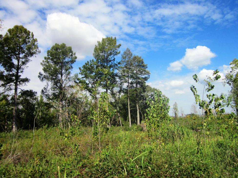 Foto Campo en Venta en  Parana De Las Palmas Campana,  Zona Delta Campana  Paraná Campana