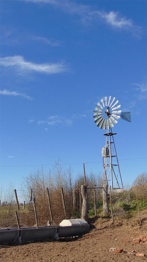 Foto Campo en Venta en  Zona Rural De Vertiz,  Chapaleufu  Zona Rural - Vertiz