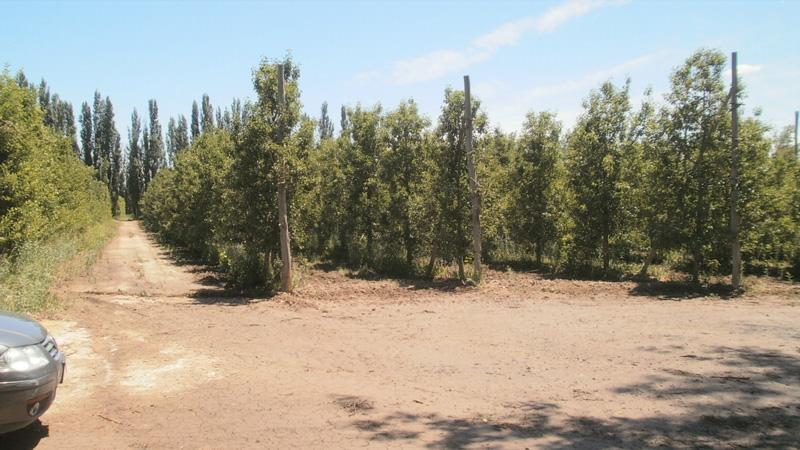 Foto Chacra en Venta en  Cervantes,  General Roca  Chacra Ruta 22