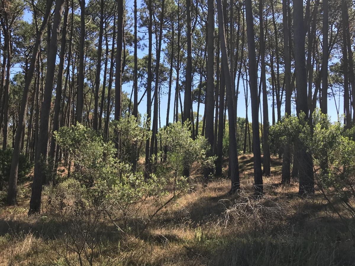 Foto Terreno en Venta en  La Barra ,  Maldonado  Barra Verde