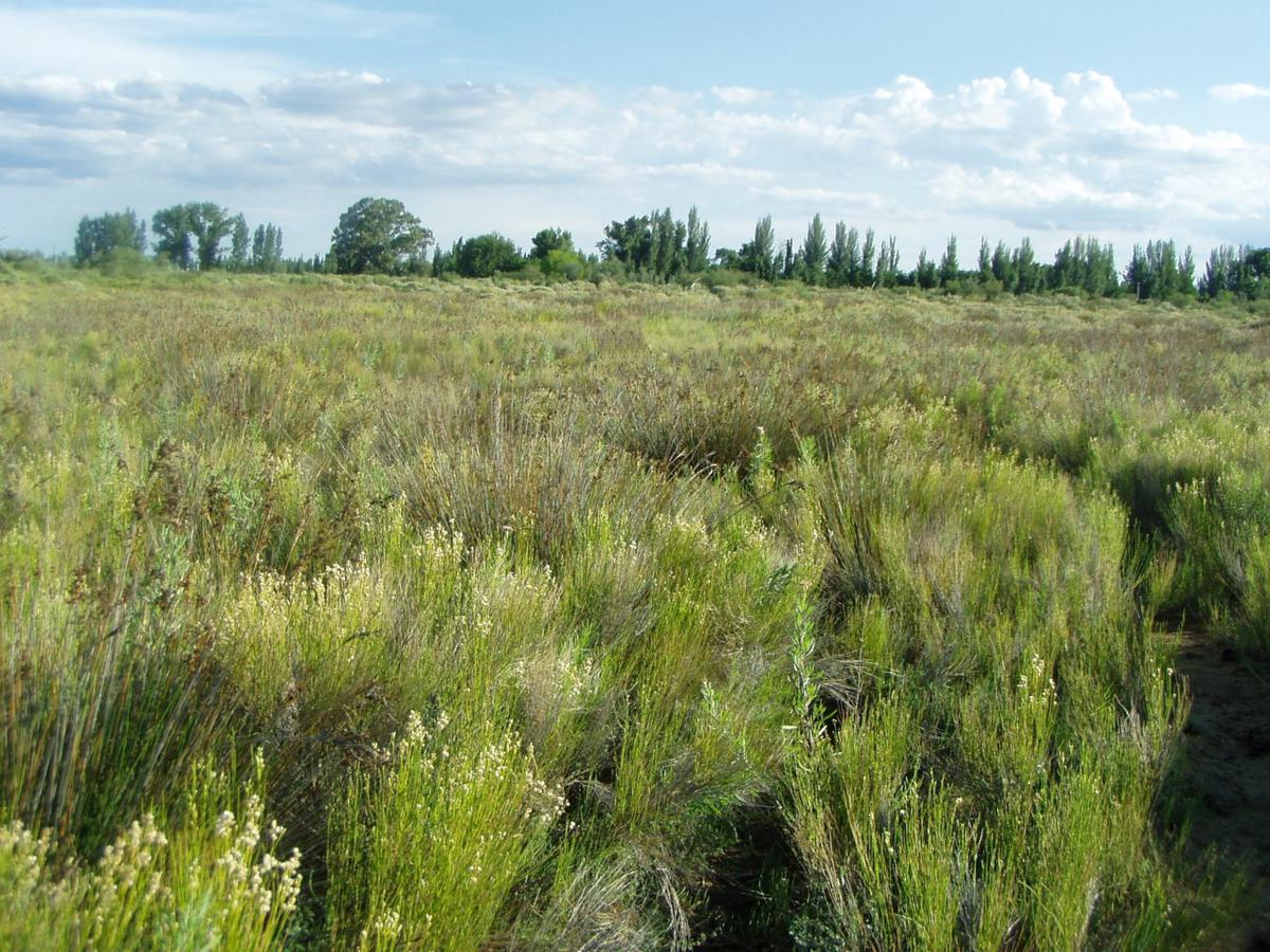 Foto Campo en Venta en  El Algarrobal,  San Rafael  Venta Finca Mendoza San Rafael 114Has. Oportunidad